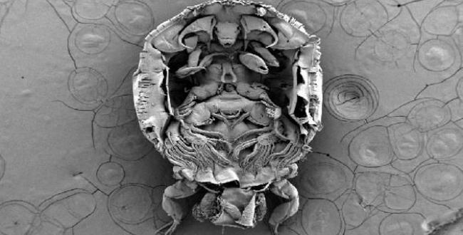Yeni bir parazit türü bulundu