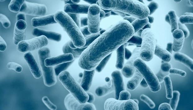 """Brezilyada """"süper bakteri"""" alarmı"""