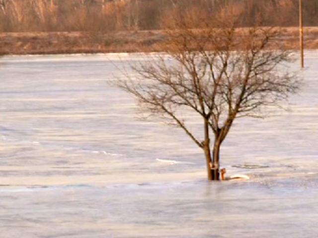 Soğuktan tarlalar bile dondu