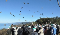 Geçen sene doğaya 91 bin kuş salındı