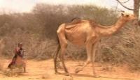 Afrika'da Son 60 Yılın En Büyük Kuraklığı
