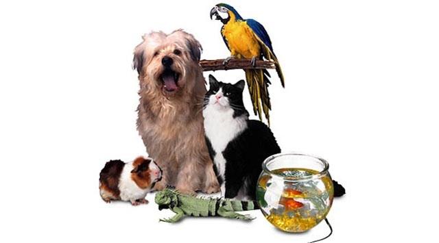Artık Hayvan Partisi de Var