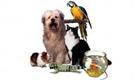 Artık ''Hayvan Partisi'' de Var