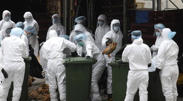 77 kişiye bulaştı, 16sı öldü