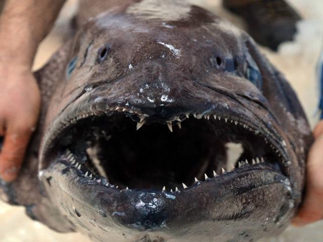 Türk sularında korkunç balık