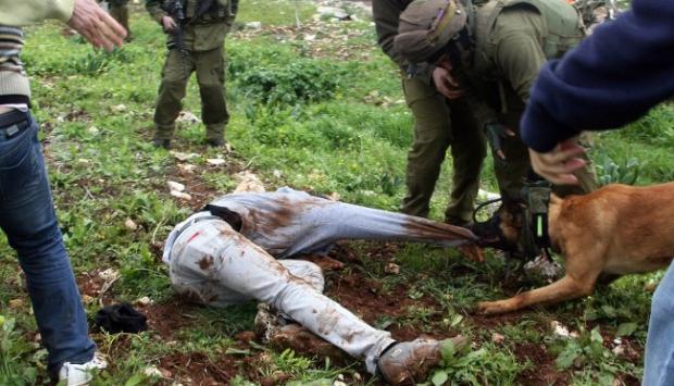 İsrail köpek kullanımını durdurdu