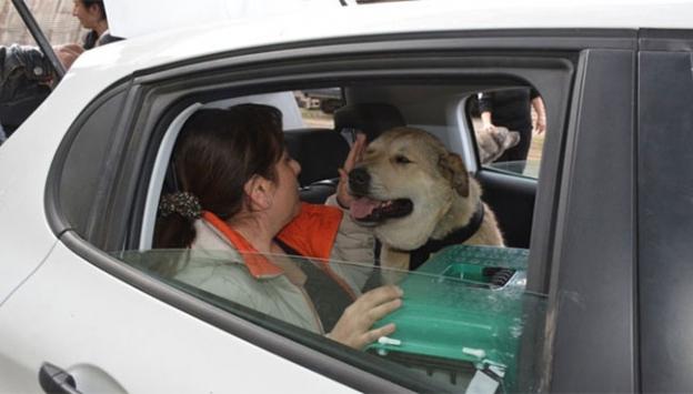 Yaralı köpeği Alman aile sahiplendi
