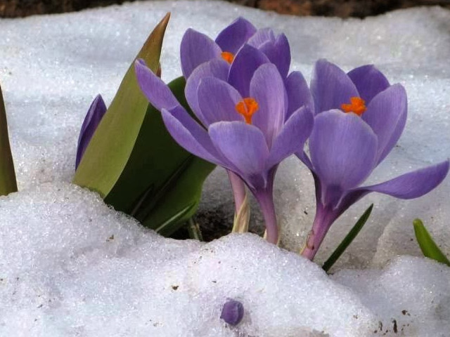 Baharın müjdecisi geldi
