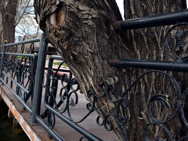 Ağaçlar demir korkulukları yuttu