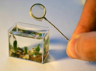 Dünyanın En Küçük Akvaryumu