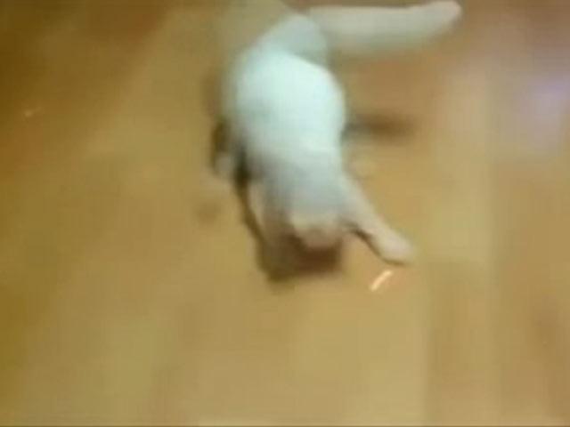 Kedi Kılını Bile Kımıldatmıyor