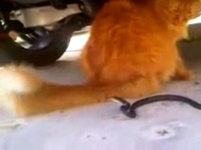 Kedinin Yılana Kuyruk Oyunu