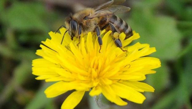Arılarla gelen ölümcül tehlike