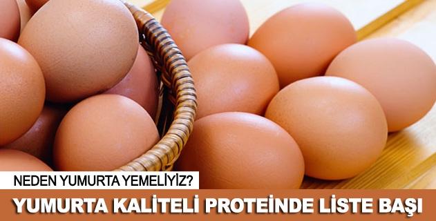 Yumurta kaliteli proteinde liste başı