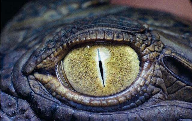 Timsah Gözü