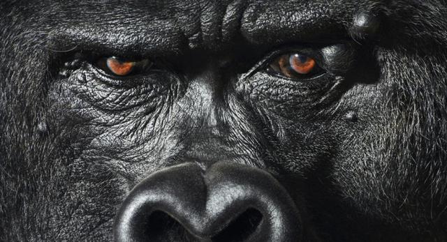 Goril Gözü