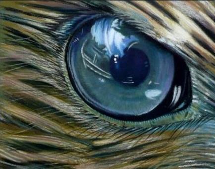 Şahin Gözü