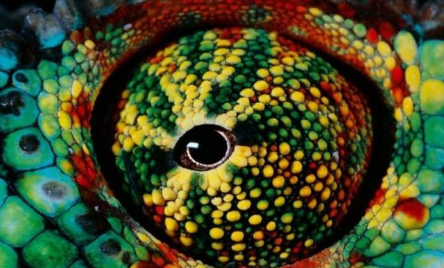 Bukalemun Gözü