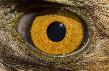 Kartal Gözü
