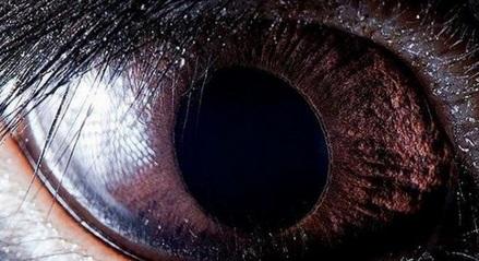 Tavşan Gözü