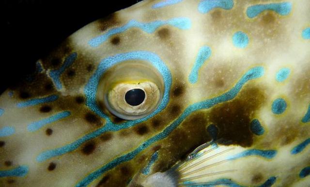Denizatı Gözü