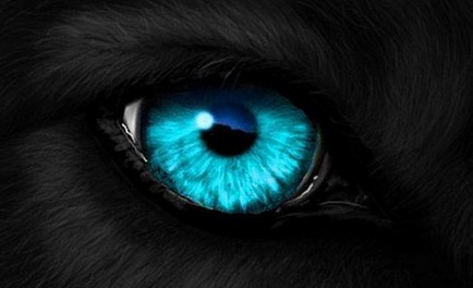Kurt Gözü