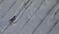 Karganın Kayak Keyfi