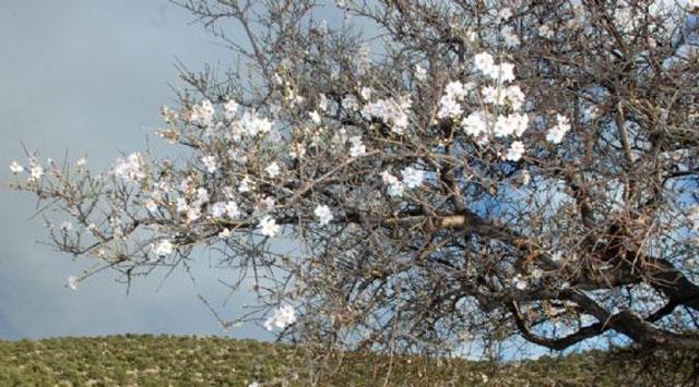 Antalyada Ağaçlar Çiçek Açtı