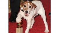 """Uggie """"Altın Tasma"""" Ödülüne Aday"""