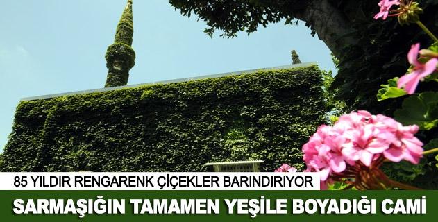 Köprüköy Camisi çevresini saran sarmaşıkla dikkat çekiyor