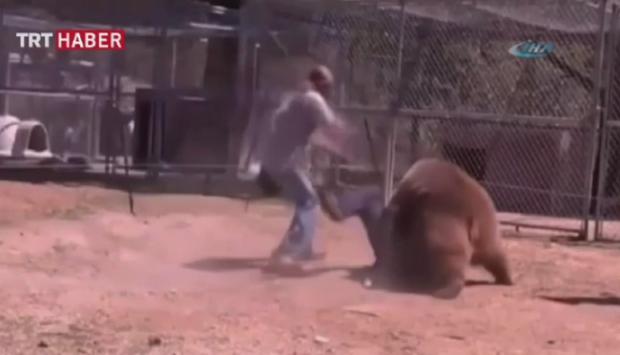 Öfkeli hayvanlar bir anda saldırırsa