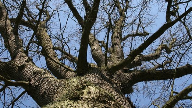 Ağaca tırmanmanın hafızaya etkileri incelendi