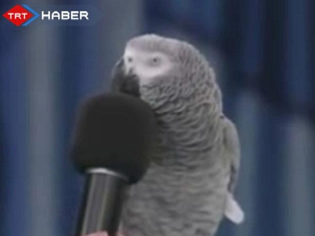Diğer Hayvanların Taklidini Yapan Papağan