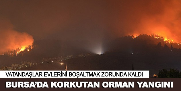 Bursa Mudanyada orman yangını