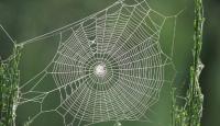 Örümcek Ağının İlginç Sırrı Ortaya Çıktı