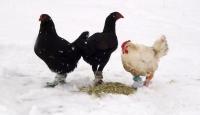 Hayvanların Kış Kreasyonu