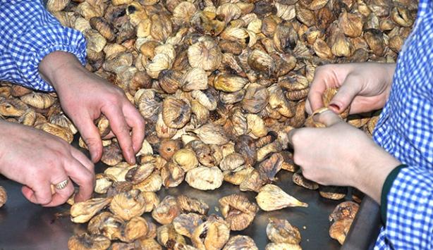 Türkiyenin kuru incir ihracatı rekor kırdı
