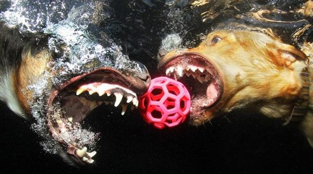 Köpeklerin Su Altındaki Garip Halleri