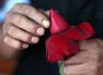 Güllerin Sevgiliye Yolculuğu