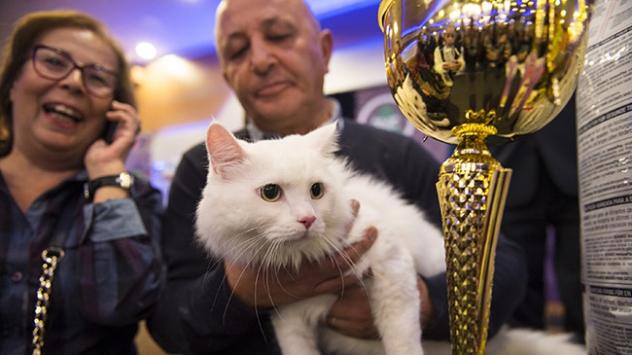 "En güzel ""Ankara Kedisi"" seçildi"