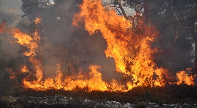 Kastamonuda orman yangını sürüyor