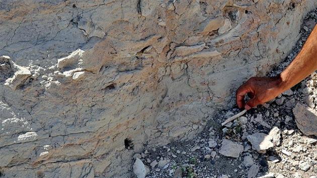 535 milyon yıllık larva bulundu