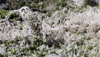 Meteorolojiden zirai don ve buzlanma uyarısı