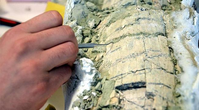 Otobüs büyüklüğünde timsaha ait fosil bulundu