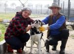 Felçli sokak köpeği protez