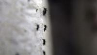 Zika virüsüne Endonezyada da rastlandı