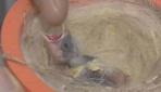 Eğitimli kanarya yavruları yok satıyor