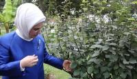 Emine Erdoğan Peruda Botanik Bahçesini ziyaret etti