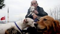 Çobanlıktan köpek gezdiriciliğine