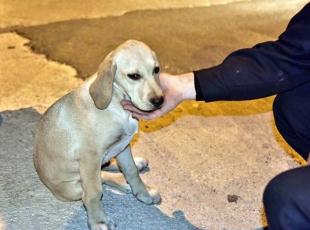 Menfeze düşen köpeği itfaiye kurtardı